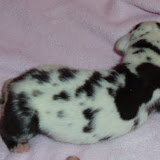 harl girl #3 @ 1 week/available