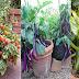 गमले में सब्जी कैसे उगाएं