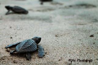 turtle village