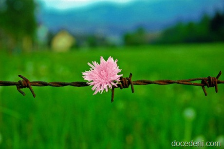 flor no arame