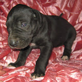 Gidget's available black girl