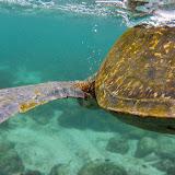 galapagos - Galapagos_FB_2-139.jpg