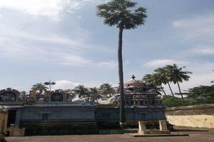 Thiruvalampuram Temple Sthala Vriksham