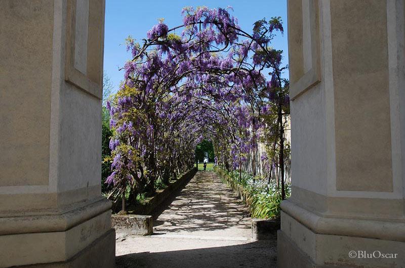 Villa Pisani 61