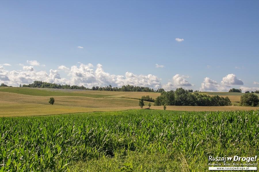 Zielona Warmia - warmińskie pola
