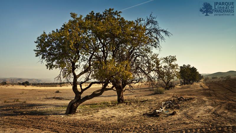 tramo 3 del parque lineal del manzanares