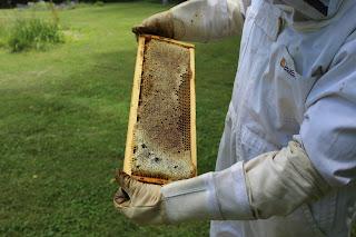 PLC Honey Fiesta 7/10/16 - IMG_3580.JPG