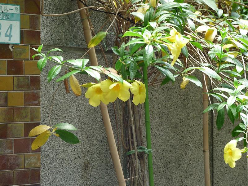 TAIWAN.Taipei - P1110321.JPG