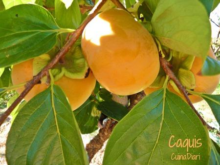B-caquis cuinadiari-ppal4-