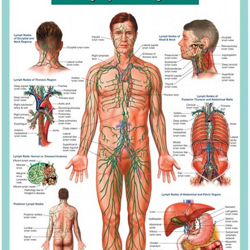 Understanding our Lymphatic System