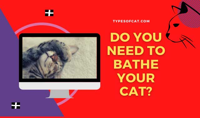 Do you need to bathe your cat