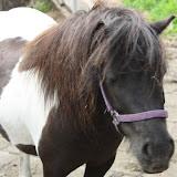 Excursie paardenmelkerij maandagochtendgroep, 18-06-2012