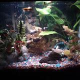 Fish - IMG_20120930_211404.jpg