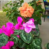 Gardening 2014 - 116_6273.JPG
