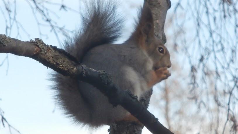 Lento-orava