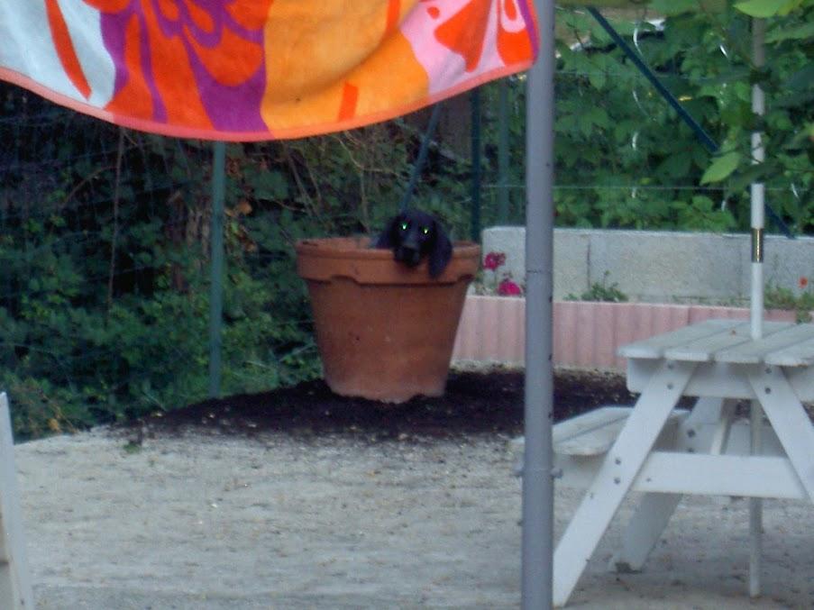 A la recherche du chien parfait PICT4357
