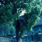 1984_06-09 PilavGünü.jpg
