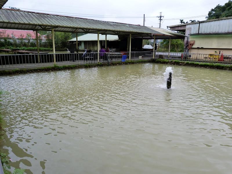 Ferme d'esturgeons, ferme de production de caviar. L'eau est trouble suite aux pluies et on ne peut voir les poissons