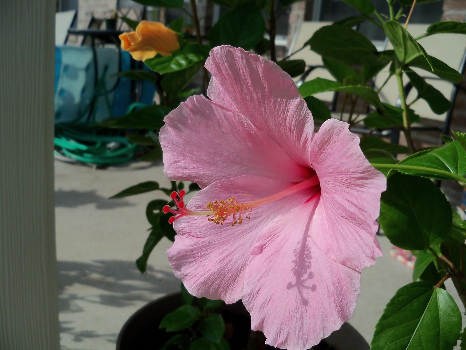 Gardening 2010, Part Three - 101_4952.JPG