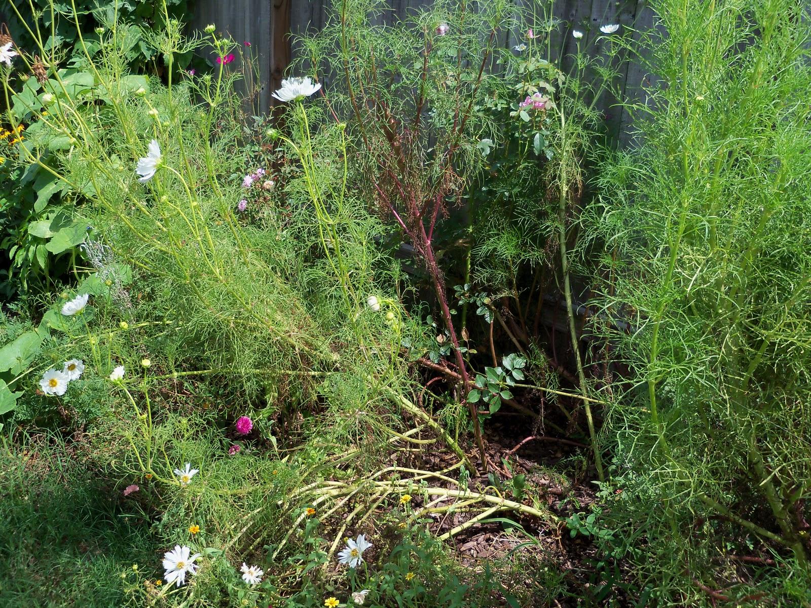 Gardening 2010, Part Three - 101_5072.JPG