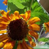 Gardening 2011 - 101_0005.JPG