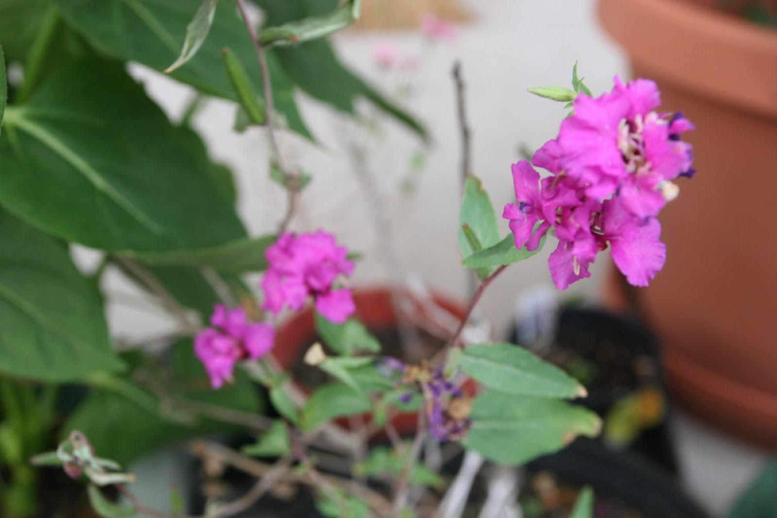 Gardening 2012 - IMG_3317.JPG
