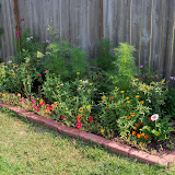 Gardening 2010, Part Two - 101_3010.JPG
