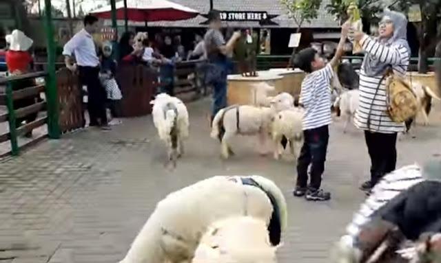 Mini zoo wisata farm house