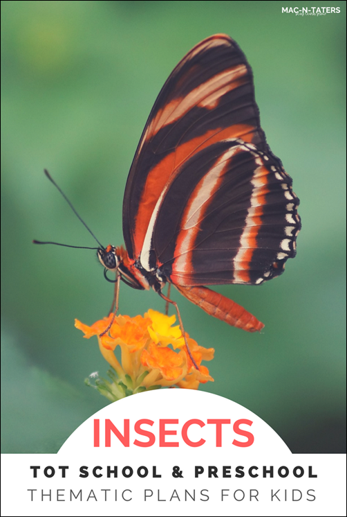 Insect Theme Tot School & Preschool Plans