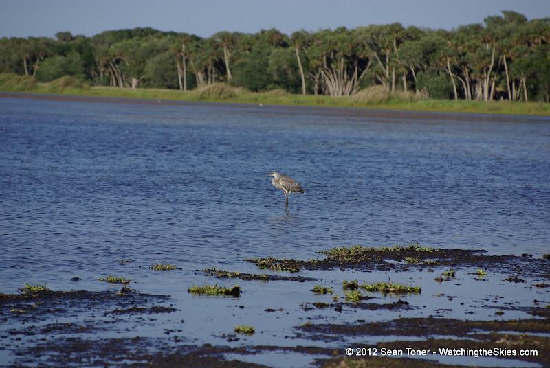 04-06-12 Myaka River State Park - IMGP4463.JPG