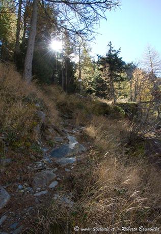 2015-10-11_Chiareggio-Porro_Valmalenco_170