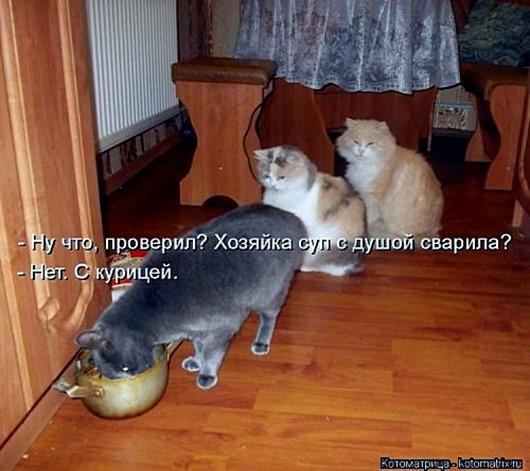 1495826312_kotomatricy-12