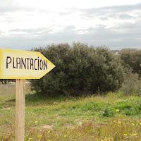 Plantación Parque de las Asociaciones