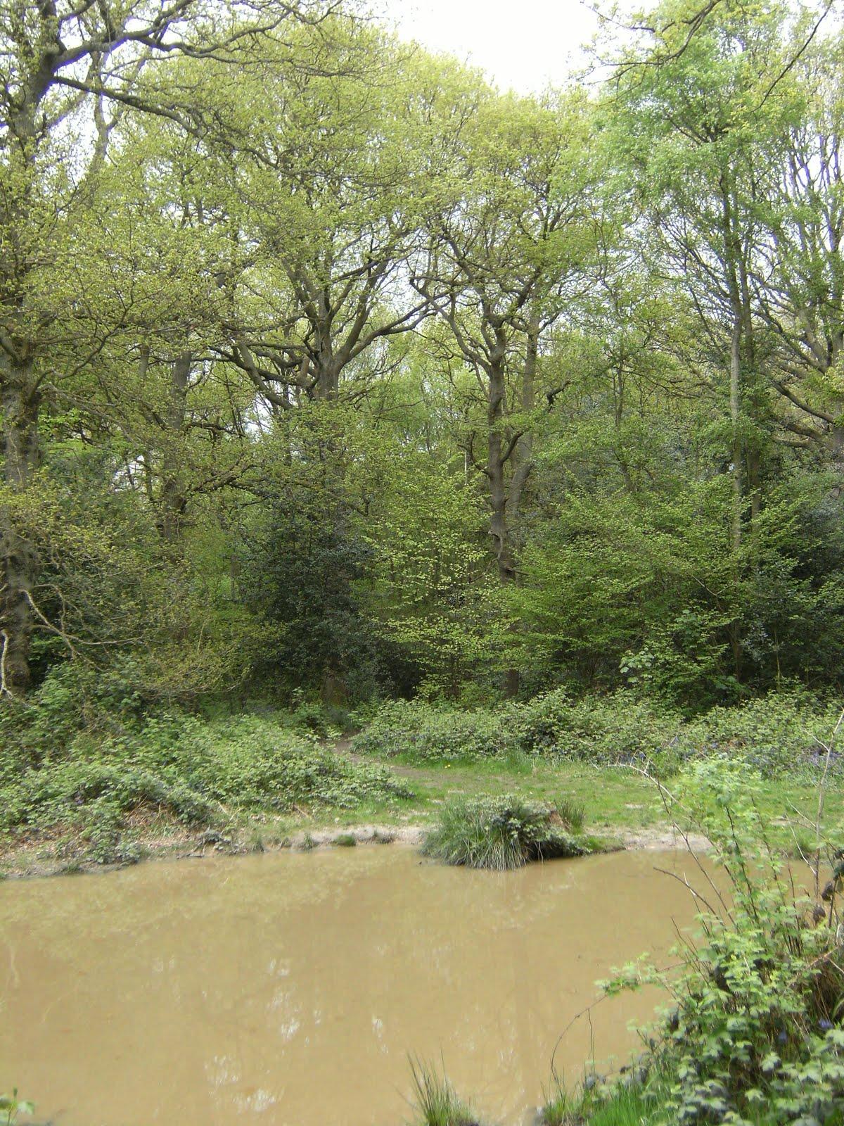 1005120036 Muddy pond in Kings Wood