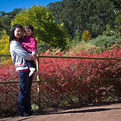 2011 04 25 Mt Lofty Botanic Garden - IMG_6396.jpg