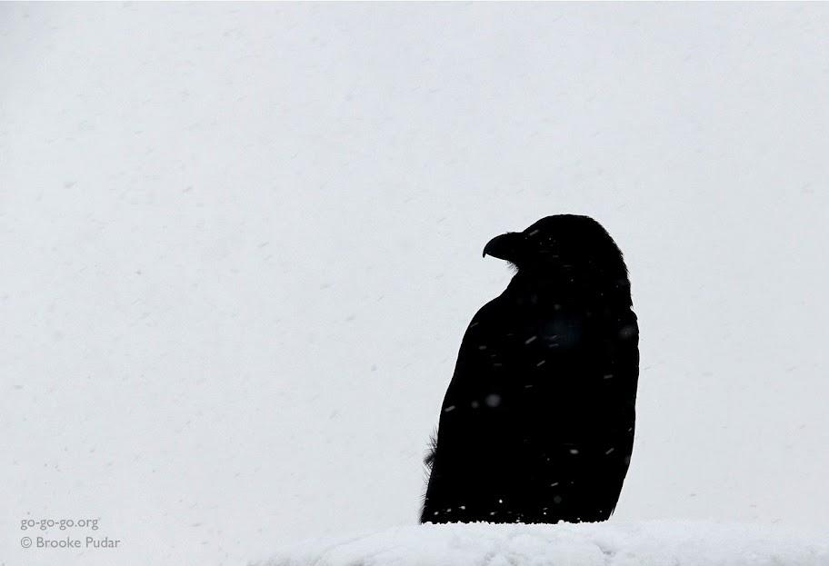 Everyday Photo: Nevermore