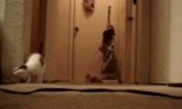 لعبة القطط بالمكنسة الكهربائية