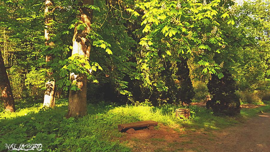 parc simeria primavara 2016