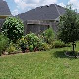 Gardening 2010, Part Three - 101_4904.JPG