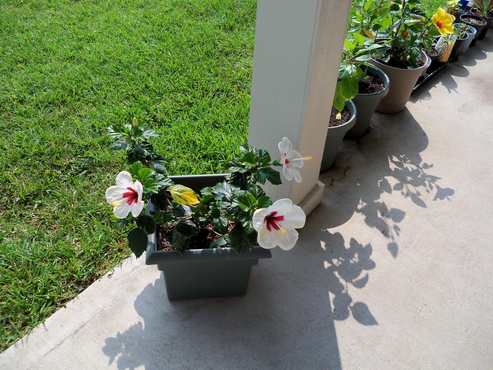 Gardening 2010, Part Two - 101_3137.JPG