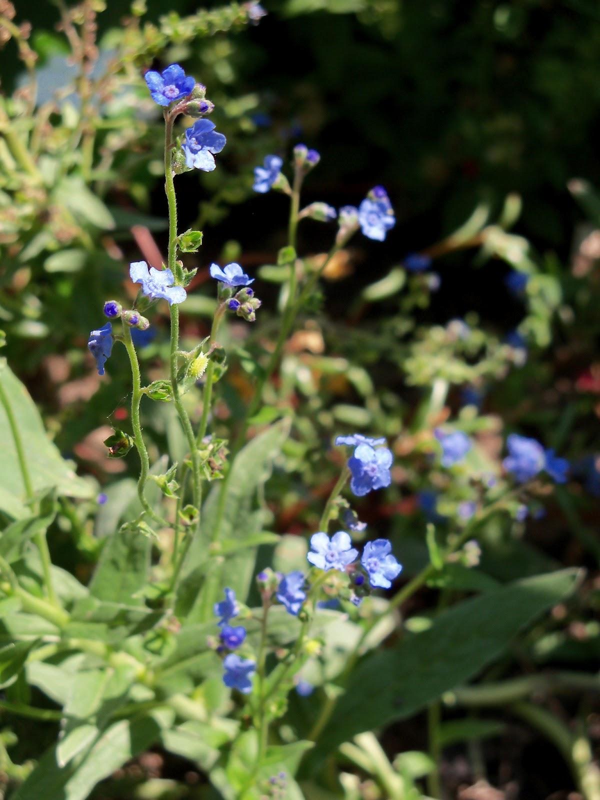 Gardening 2011 - 100_9184.JPG