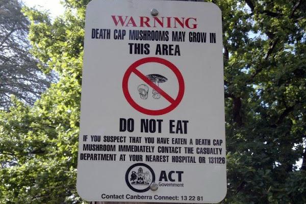 mushroom sign