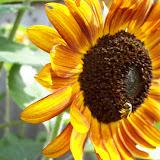 Gardening 2009 - 101_4500.JPG