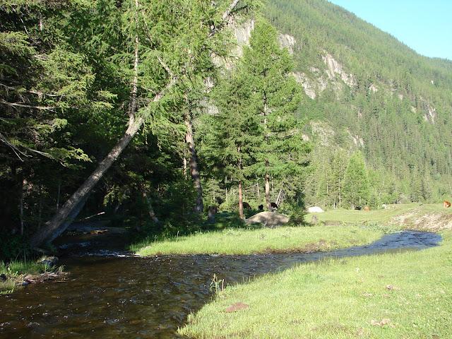 Aux environs d'Aktash dans l'Altaï. Photo : Leonid