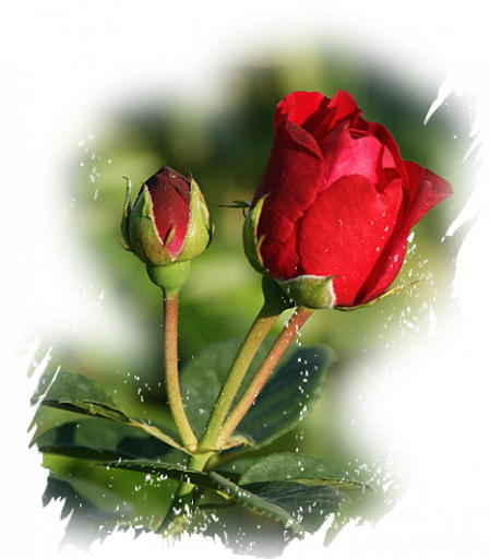 blomster%252520%2525281470%252529.png