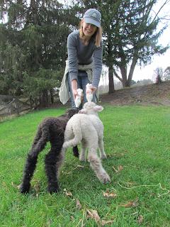 Hungry lambs!