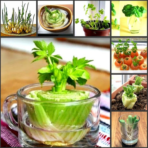 Photo Овощи, которые можно выращивать дома