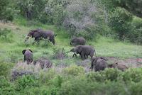 Ogled narodnega parka Chobe (Bocvana)