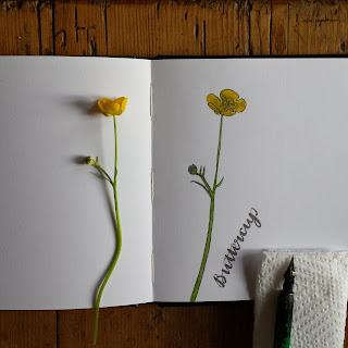 Buttercup :: www.AliceDrawsTheLine.co.uk