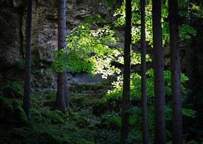 0894-Germany-20140815.jpg